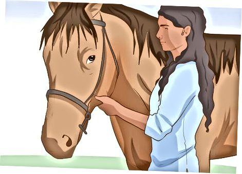 Պատրաստ է ձեր ձին