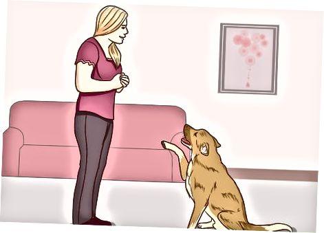 Comprender el comportamiento del perro