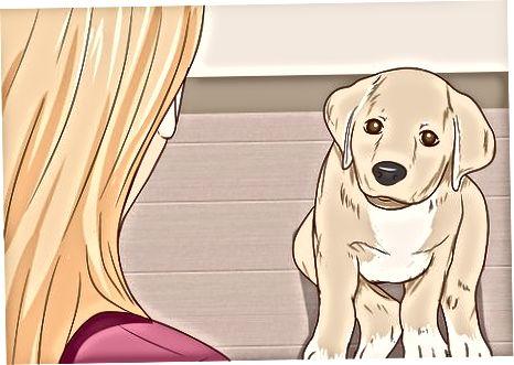 Forstå hundatferd