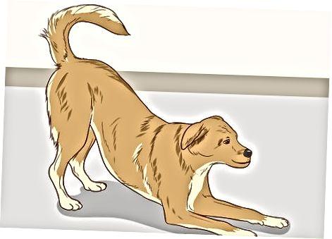 Å lese hundens kroppsspråk