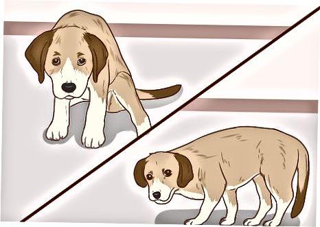 Leer el lenguaje corporal de tu perro