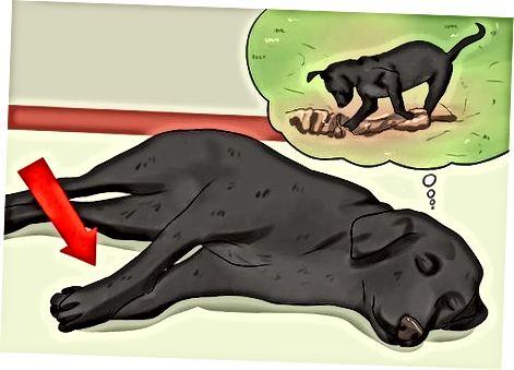A kutya álmai testbeszédének megtanulása