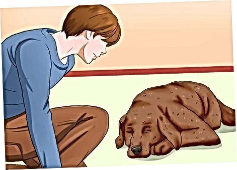 Tudva, mit kell tenni, amikor a kutyája álmodik
