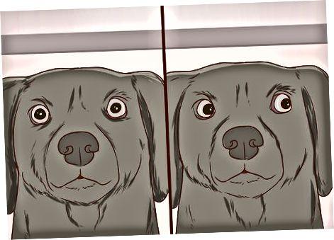 Reconociendo las señales de la cara y la cabeza de su perro