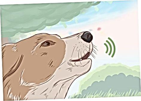 Tolke hundens vokaliseringer