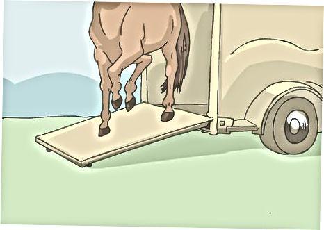 Sätta ner hästen i