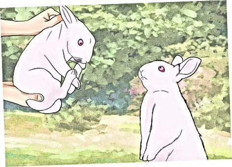 Yeni Doğan Tavşanların Gelişine Hazırlanma