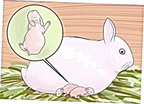 Zorg voor de pasgeboren konijnen