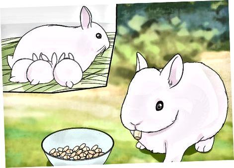 Yeni Doğan Tavşanların Bakımı