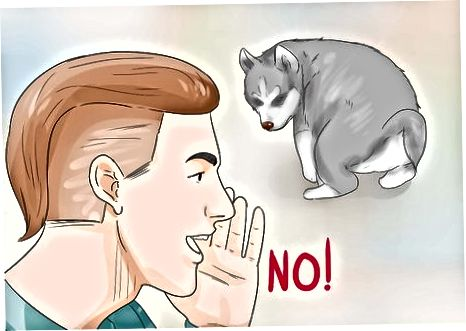 Training Är Puppy