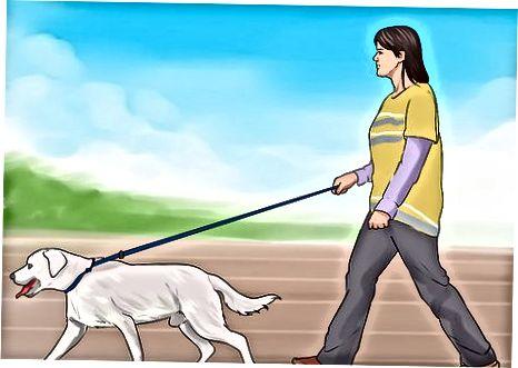 Podpora dobrého zdraví a zaměření