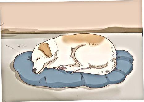 Menyediakan Kebutuhan Dasar Anjing Anda