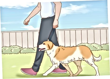 Zagotavljanje osnovnih potreb vašega psa