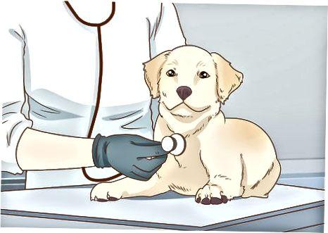 Sigurimi i nevojave themelore të qenit tuaj