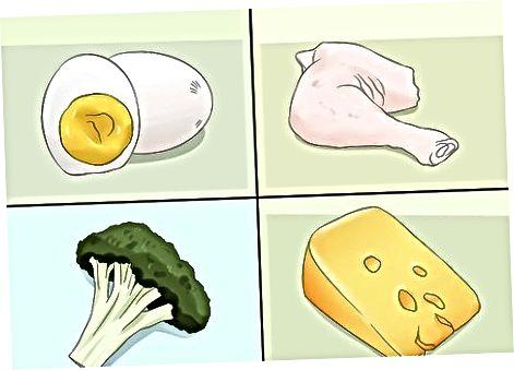 Att veta hur man matar ditt husdjur