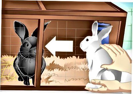 W trosce o króliki