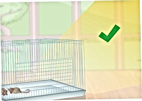 Colocación de la jaula
