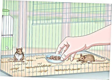 Llenando la jaula