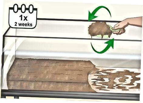 Manteniendo el hábitat de tu rana