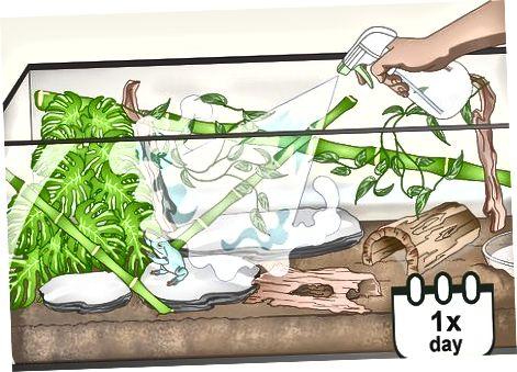 Mempertahankan Habitat Kodok Anda