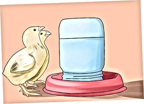การดูแลลูกไก่