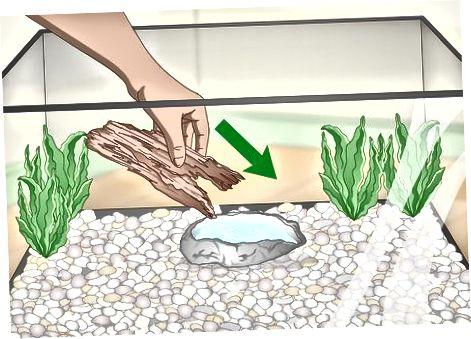 Cuidar de las ranas arbóreas verdes