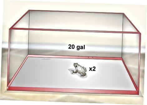 Proporcionar ranas grises