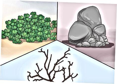 Příprava domova pro žabu stromovou