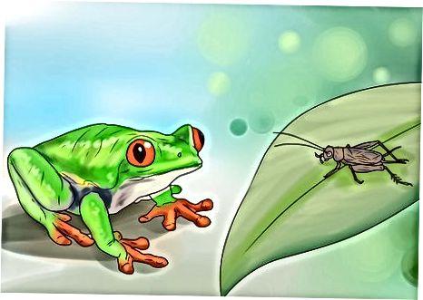 Догляд за вашою деревною жабою