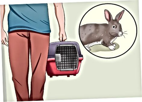 Ветеринарға бару