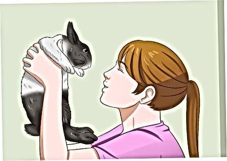 Att ta hand om din kanin