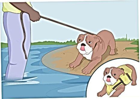 Decidir si su perro necesita un chaleco salvavidas
