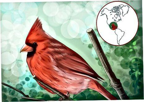 Ҷалб кардани ҳавлии шумо ба кардиналҳо