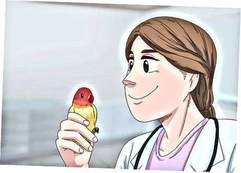 Cuidando un Lovebird enfermo
