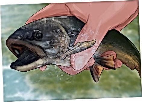 Håndtering af hooked fish