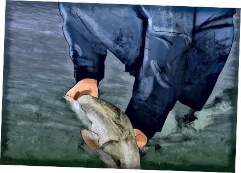 Zivju atbrvoana pc nozvejas