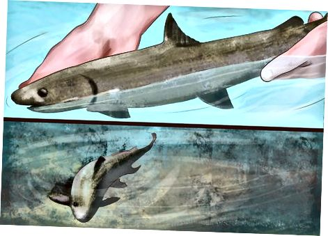 Slip fisk efter en fangst