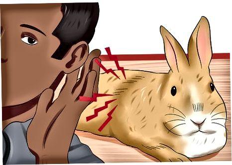 Identificación de problemas digestivos en conejos