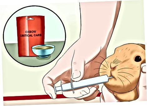 Buscando tratamiento veterinario general