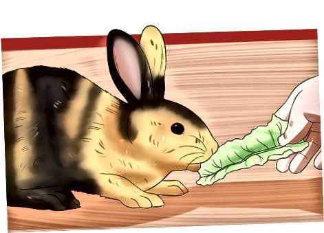 Tratando a tu conejo en casa