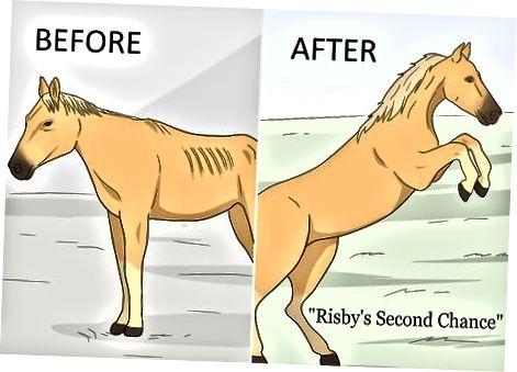 Brainstorming Idéer baserade på din häst