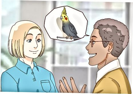 Cockatiel 구매 준비하기