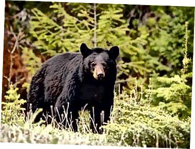 Expresión Mujer Mitones  oso negro vs puma 2020