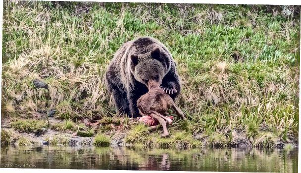 Contestar el teléfono Aprendiz Diligencia  puma vs oso | 2020