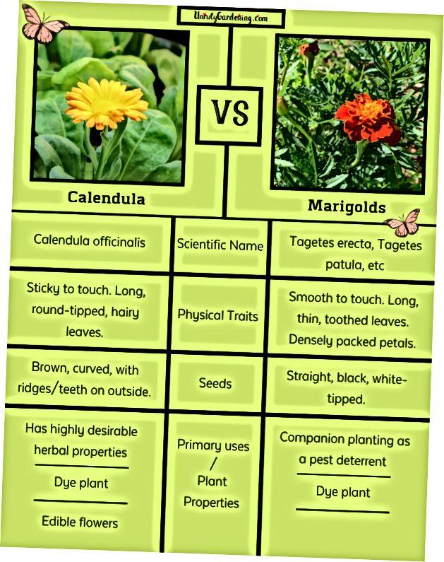 Marigold Vs Calendula 2020