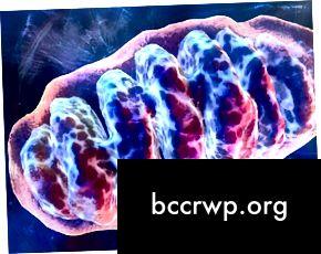 mitocondris1