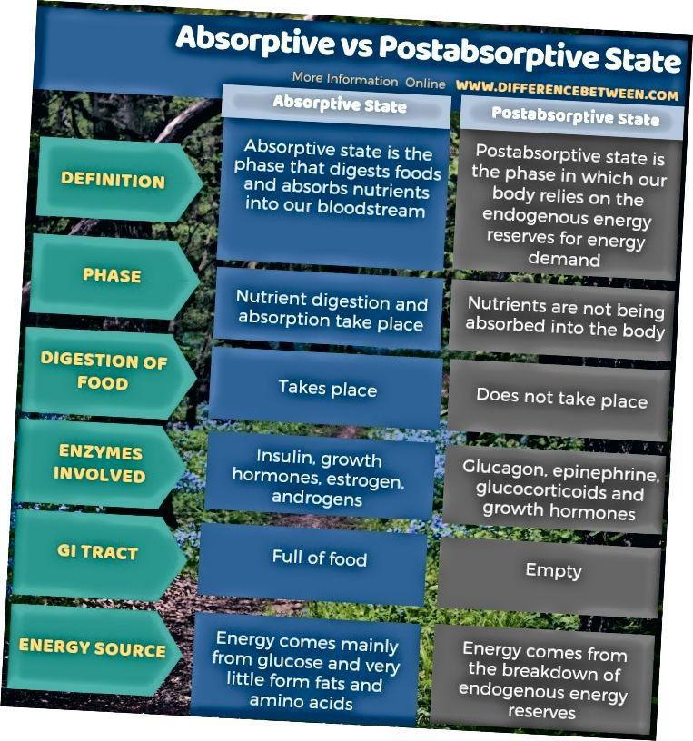 Разлика между Абсорбиращо и Постабсорптивно състояние в таблична форма