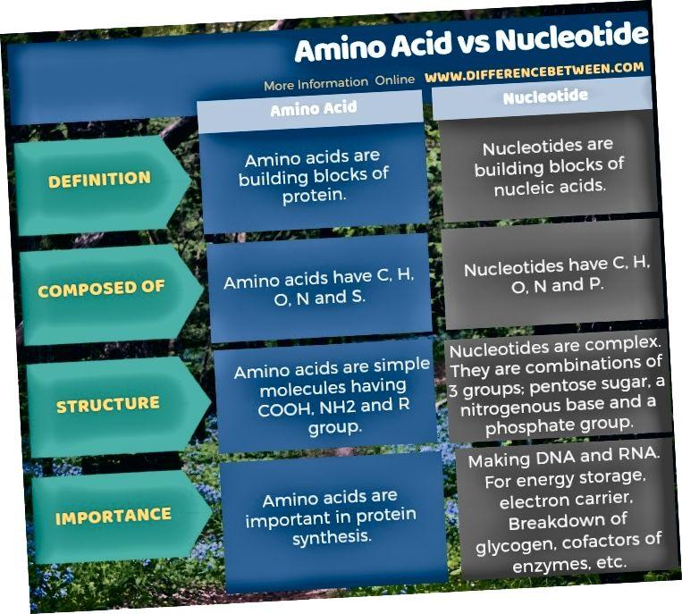Разлика между аминокиселината и нуклеотида в таблична форма