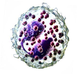 Basofilas prieš eozinofilą