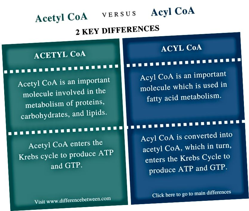 Rozdíl mezi acetyl CoA a Acyl CoA - shrnutí srovnání